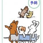 狂犬病予防接種・フィラリア予防のご案内
